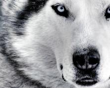 w_animales15.jpg